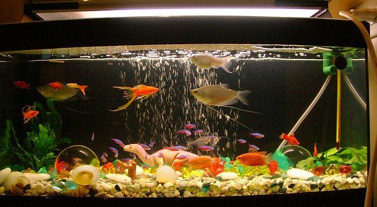 myths about keeping a fish tank the brunette diaries