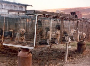 Puppy mills are a cruel place for these dogs and their puppies
