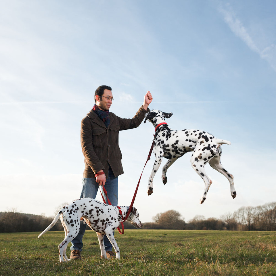 Dalmatians are bred to run, and can make for great running buddies