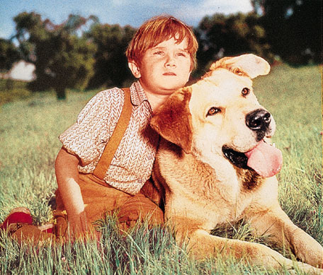 movies every dog lover must watch