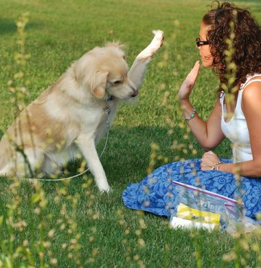 Make training your dog a fun activity