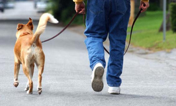 Long walks may be tiring your pet and can prove dangerous to your dogs health