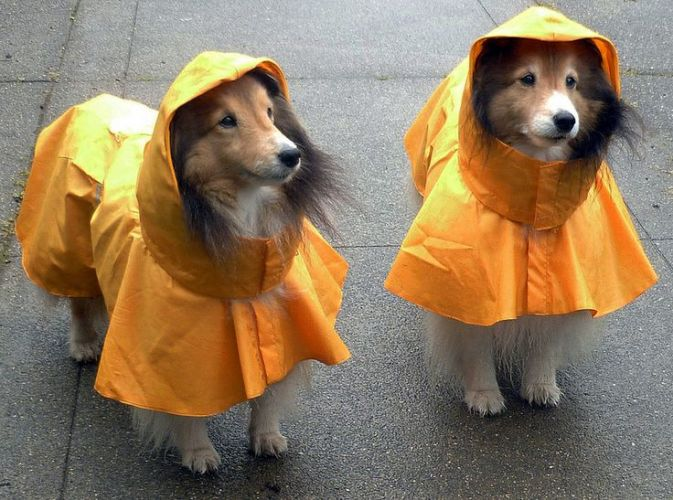 Monsoon season pet care