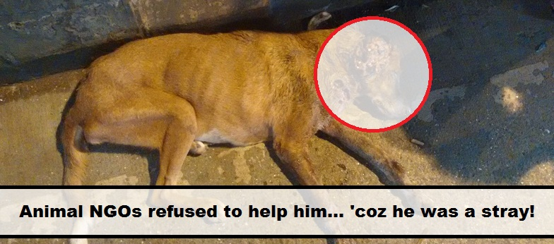 Are Animal NGOs Not Meant For Street Animals In Need? | The