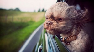Road trip with your pooch