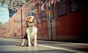 taking your pet by train