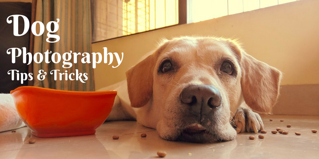 Dog photography tips and tricks