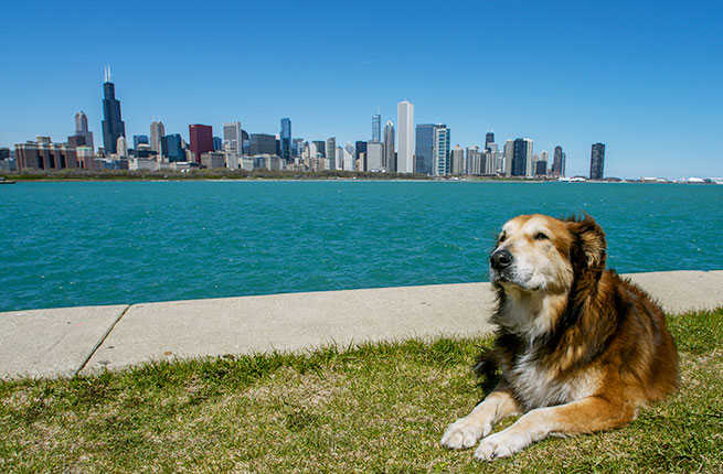 Places you should take your dogs on vacation