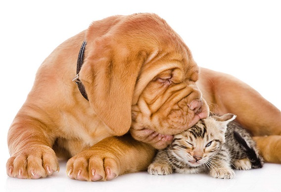 6 Ways To Make Your Dog Get Along With A New Pet Cat
