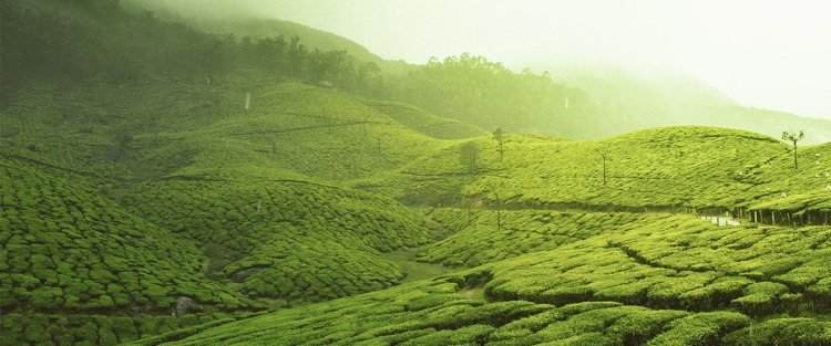5 Reasons Why You Should Visit Munnar At Least Once In Your Life!